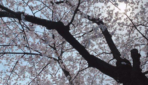 美容師の方々と代々木公園で花見をした休日